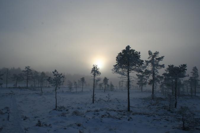 Kauhaneva-Pohjankangas8