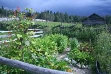 ollila-farm-koli-national-park2