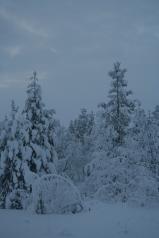 Road to Kilpisjärvi