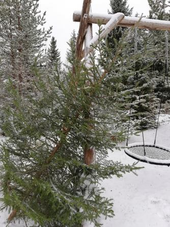 My christmas tree this year