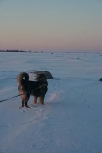 Senni, our current dog in Rauma