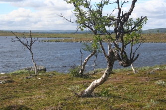 tuulijärvi5