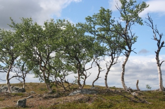 tuuljärvi3