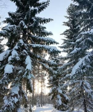 Little sun between snowing