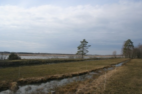 Puurijärvi