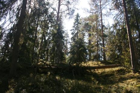 Kuusisto nature path