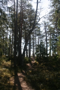 Kuusisto nature path